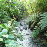 B2 - Banos Jungle Day Trip - June 27, 2015 (106)