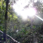 B2 - Banos Jungle Day Trip - June 27, 2015 (110)