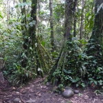 B2 - Banos Jungle Day Trip - June 27, 2015 (114)