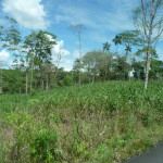 B2 - Banos Jungle Day Trip - June 27, 2015 (30)