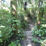 B2 - Banos Jungle Day Trip - June 27, 2015 (96)