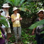 D3 - Cacao Jungle Trip, Guatemala - Sept 10, 2015 (91)