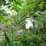 D4 - Around San Marcos, Guatemala - Sept 15, 2015 (14)